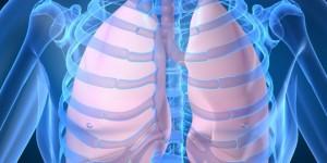 Первое в мире искусственное лёгкое в натуральную величину для изучения влияния загрязнений воздуха.